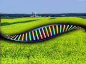 OGM - ADN