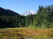 Mount Rainier above Longmire Meadow