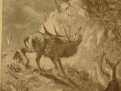 la provocation entre cerfs