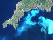 English: Under certain conditions, Emiliania huxleyi can form massive blooms which can be detected by satellite remote sensing. What looks like white clouds in the water, is in fact the reflected light from billions of coccoliths floating in the water-col