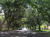 English: Tree-lined road of Highland Park, Texas