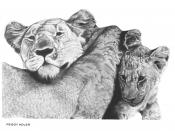 English: Pencil Drawing from