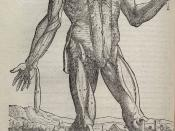 The Fabrica is known for its highly detailed illustrations of human dissections, often in allegorical poses.