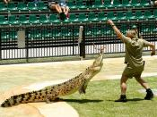 Steve Irwin feeding a crocodile at Australia Zoo.