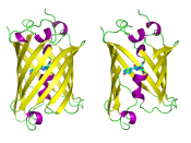 Green Fluorescent Protein drawn in cartoon style with fluorophore highlighted as ball-and-stick; one wholly-reproduced protein, and cutaway version to show the fluorophore. Modelled and rendered using PyMOL.