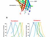 Structure et spectres de la GFP