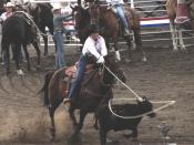 Woman roping a calf at the Buffalo Bill Cody Stampede Rodeo