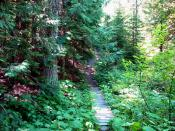Hiking trails in Trail area