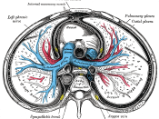 Transverse section of thorax, showing relations of pulmonary artery.