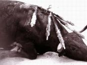 Bull dying in a bullfight