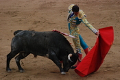 English: A matador seen with the bull in the final sequence of the bullfight. Taken in Madrid Spain.