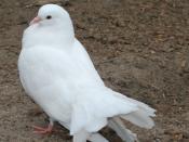Animal Farm: Dove, Creative Commons