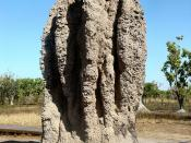 Photo taken and supplied by Brian Voon Yee Yap. Cathedral Termite Mounds in the Northern Territory.