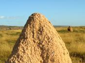 termite exmouth mound, Australia. தமிழ்: மேற்புறம் மூடிய நிலையிலுள்ள புற்றின் காட்சி, ஆசுதிரேலியா.