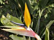 Taken at Melbourne Botanical Gardens