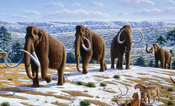 English: s (Mammuthus primigenius) in a late landscape in northern . (Information according to the caption of the same image in Alan Turner (2004). National Geographic Prehistoric Mammals. Washington, D.C.: National Geographic. ISBN 9780792271