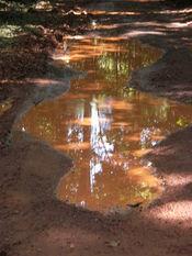 English: Rain puddles, Brownsberg