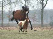 English: The little pony was teasing his big friend ...