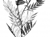 Illustration from book