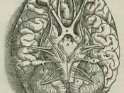 From the 1543 book in the collection in National Institute of Medicine. Andreas Vesalius' Fabrica, showing the Base Of The Brain, including the cerebellum, olfactory bulbs, optic nerve.