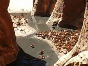 Camels in Guelta d'Archei, Ennedi, north-east Chad