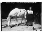 Barnum-Bailey Show - Model Artist Horse Posing  (LOC)