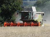 Kimble Harvest 2013 - IMG_7373r
