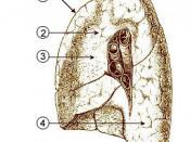 Mediastinal surface of lung