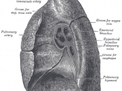 Mediastinal surface of right lung.