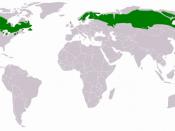 English: Distribution of Taiga region