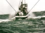 Fishing vessel trolling for tuna in the Pacific.