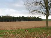 English: Woodland near Veldt House