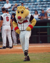 English: The mascot Ozzie.
