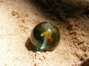 English: A Super Micro image of a toy marble.