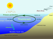 Grafic of the nutrient cycle in the marine realm