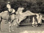 Postcard of a Tuareg displayed with his camel in the 1907 Colonial Exhibition.