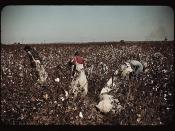 Day-laborers picking cotton near Clarksdale, Miss.  (LOC)