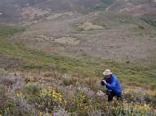 Docent biologist Jerry Kirkhart has extensive knowledge of all the plants and animals in our California State Parks.  It is indeed the lucky visitor who gets Jerry as a docent on an interpreted walk.  Jerry has become an expert photographer as well, and c