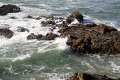 English: Harbor seals Phoca vitulina at Pescadero State Beach