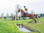 A horse on cross-country, showing the