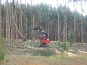 Harvesting a stand of eucalyptus pulpwood in Australia.